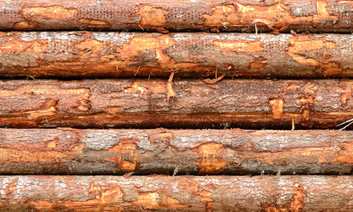 hochstetler timber sales